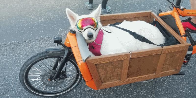 Hund-Lastenrad-Bullit-Holzkiste-Brille_cropped.png