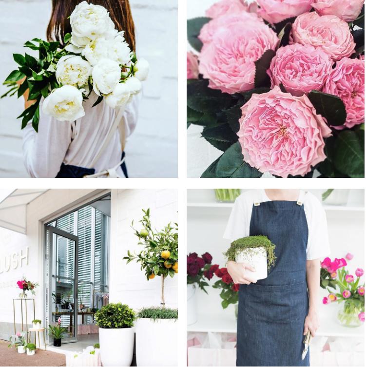 @blush_flowers Gallery