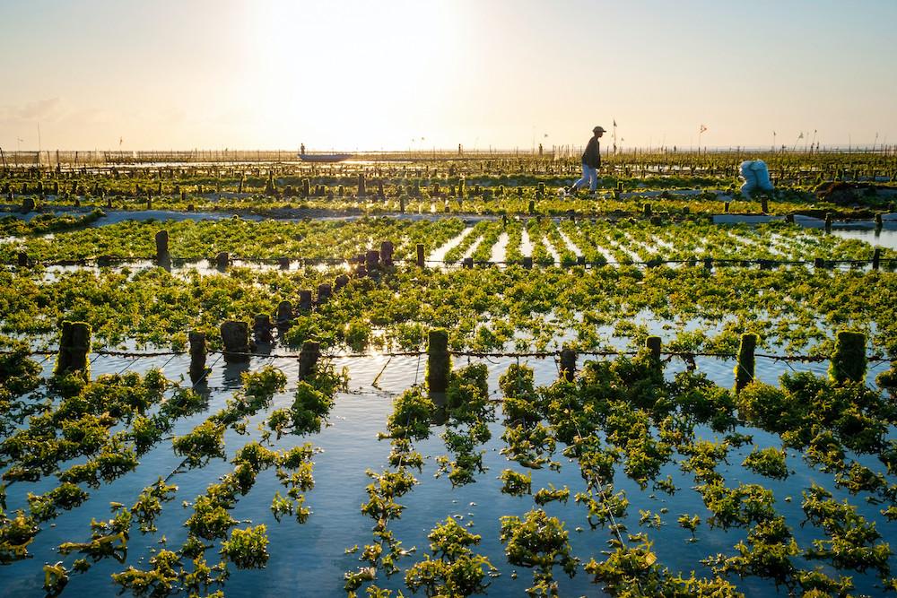 open system microalgae.jpg
