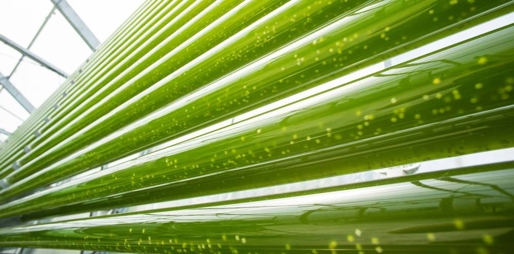 photobioreactor glass.jpg