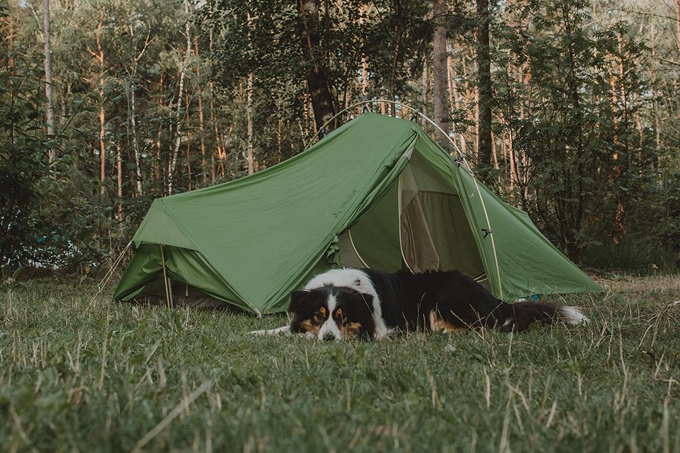 Een tent in het bos wordt bewaakt door hond