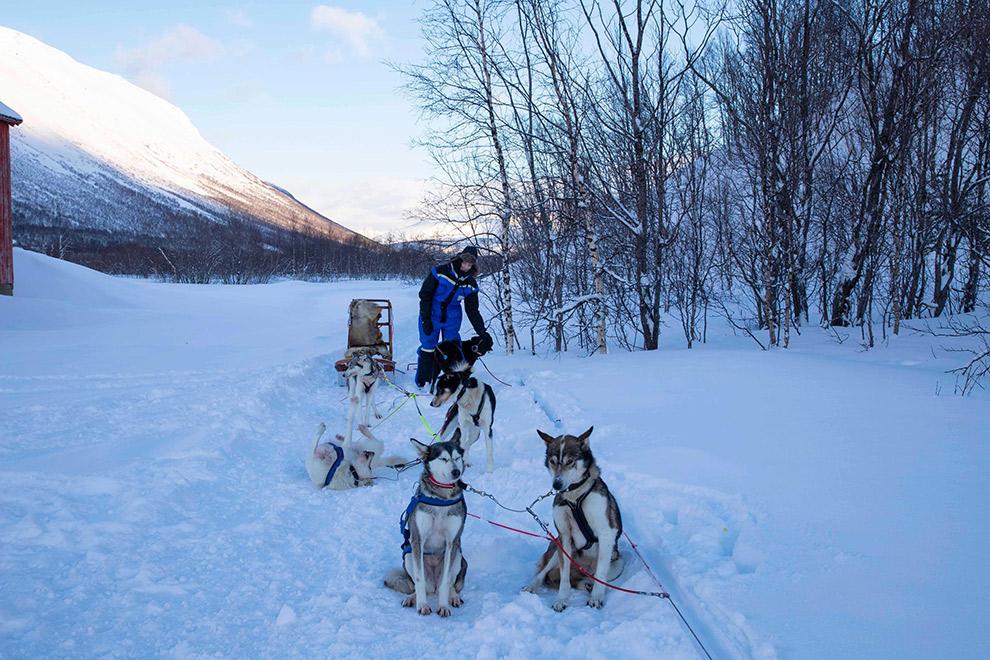 Husky's voor de slee gespannen in Noorwegen