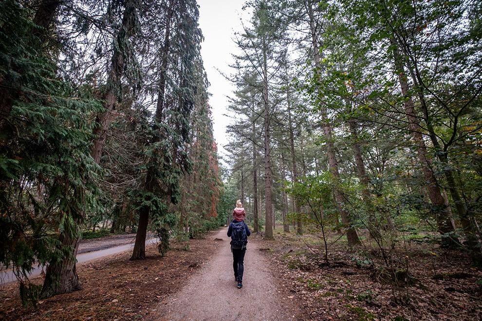 Wandelen in het Noord-Brabantse Herperduingebied