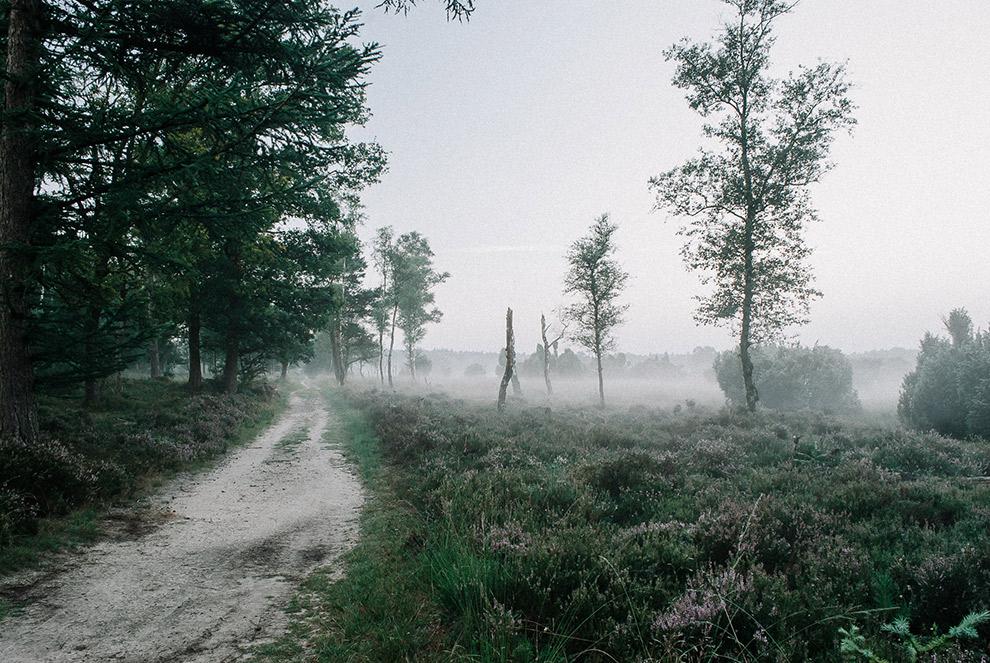 Mist op het Groningse platteland