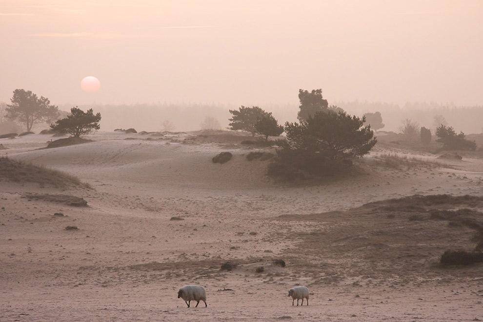 Zandvlakte in het Drents-Friese Wold in Drenthe