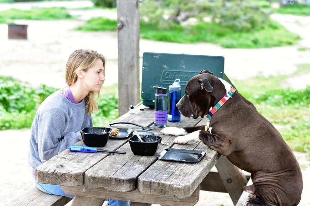 Lunchen aan picnictafel tegenover hond Snoop