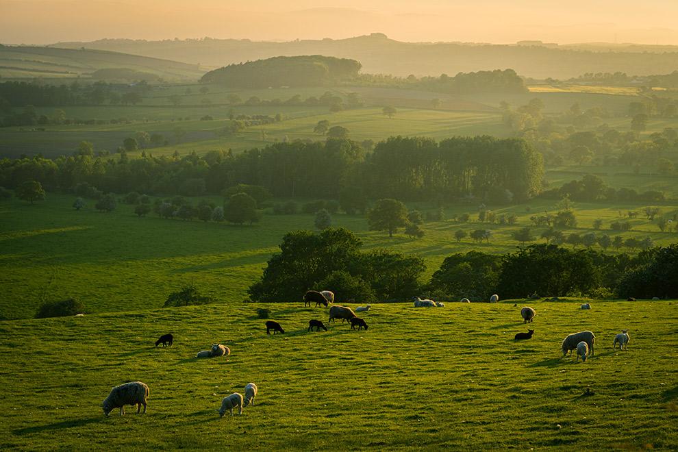 Groen glooiend landschap in Yorkshire, Engeland