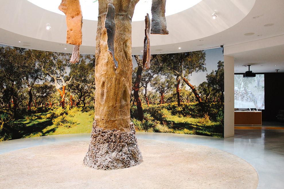 Kurkboom tentoongesteld in museum Planet Cork Porto