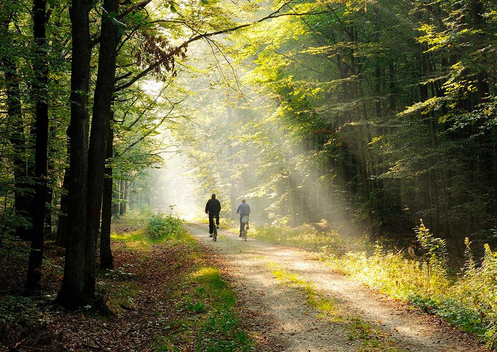 Fietsen tussen de zonnestralen in het bos van Noord-Veluwe