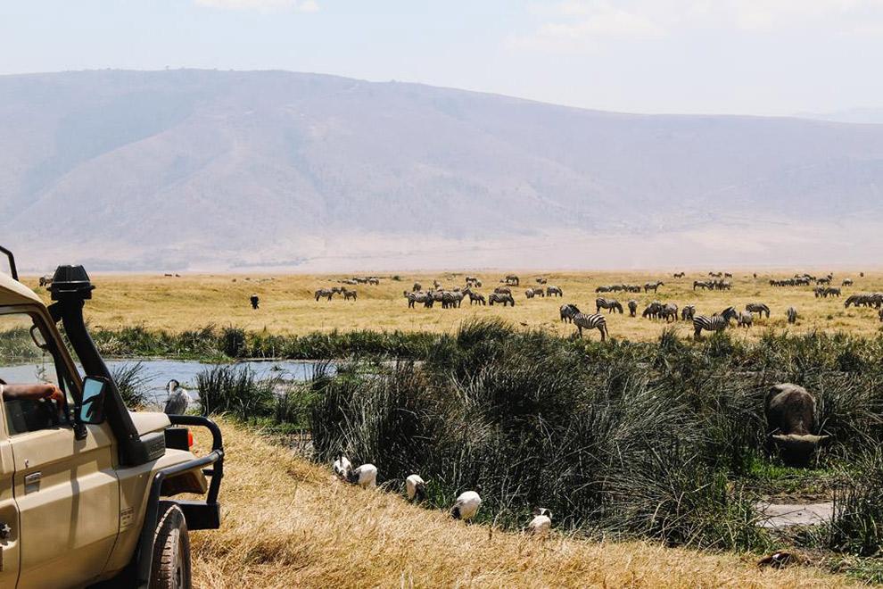 Zebra's spotten vanuit de Jeep tijdens safari in Afrika