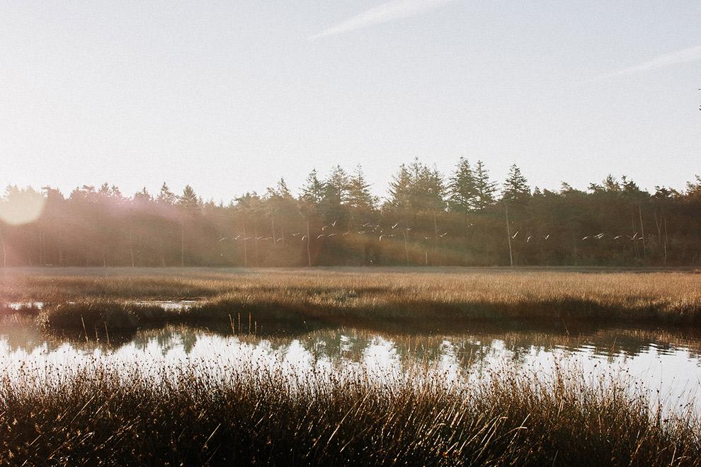 nederland-wateroppervlak-natuur