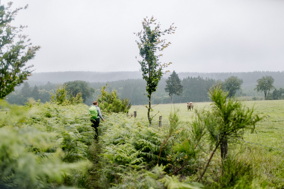 Uitzicht over groene weilanden in de Ardennen