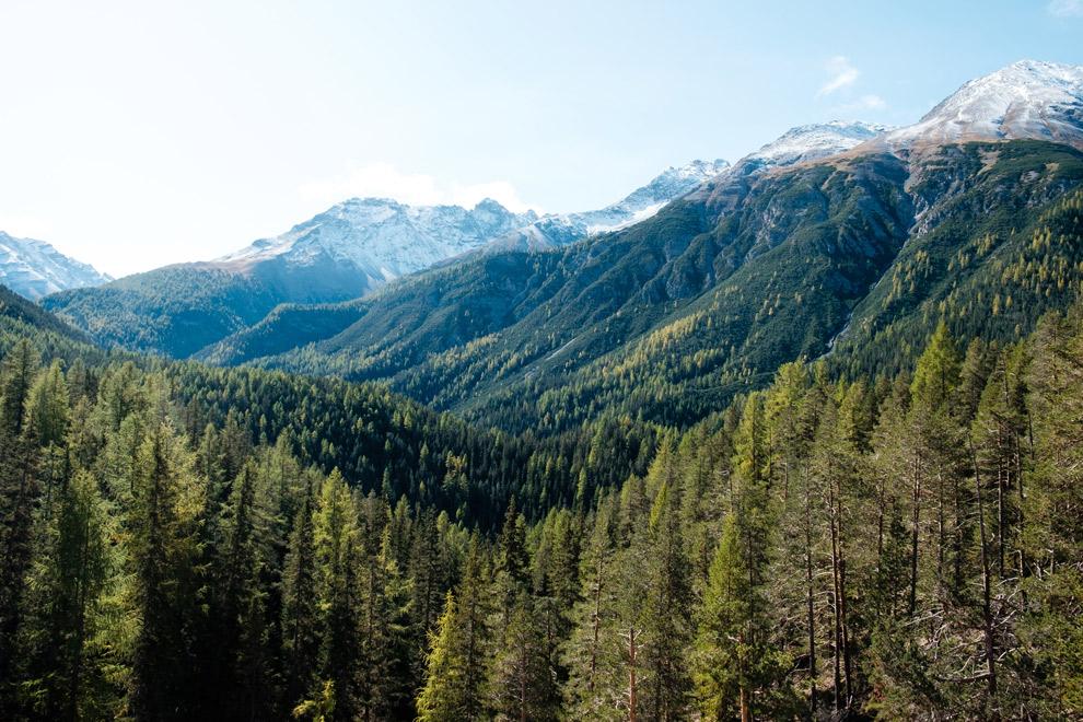 Boslandschap Swiss National Park