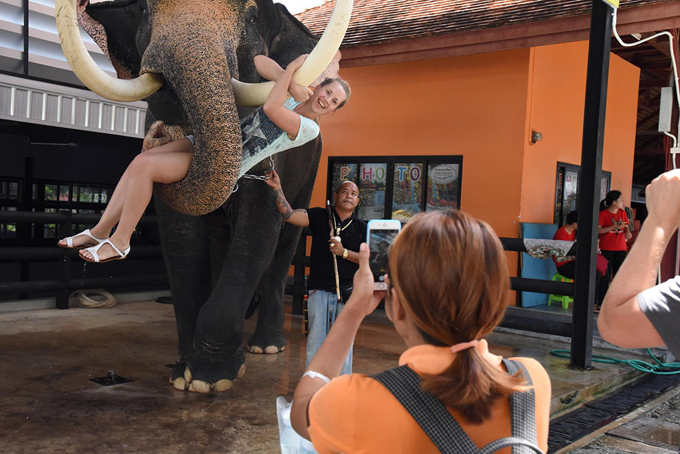 Hangen aan de slagtand van een olifant is dierenleed