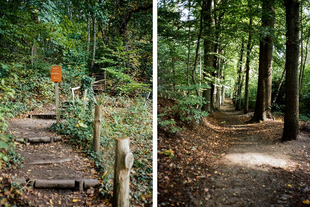 Paadjes door de groen bos in Nijmegen
