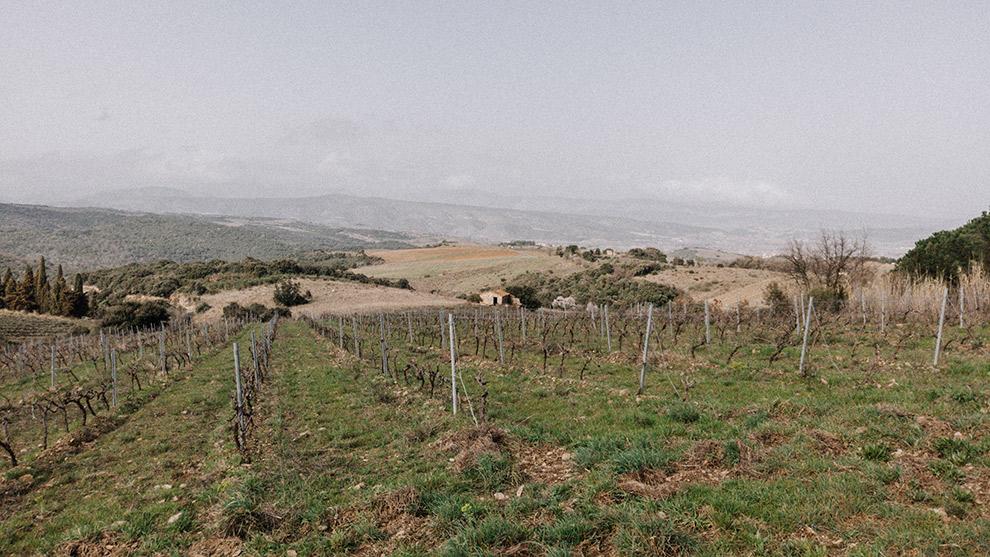 Wijngaarden van het Château de Caladroy op een heiige dag