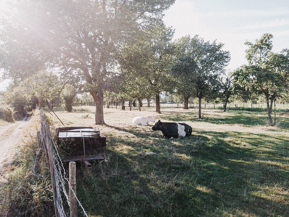 Ochtendzon schijnt door achtertuin van een boerderij