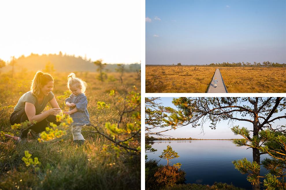 Zon kleurt moerasgebied in Zweden blauw en geel