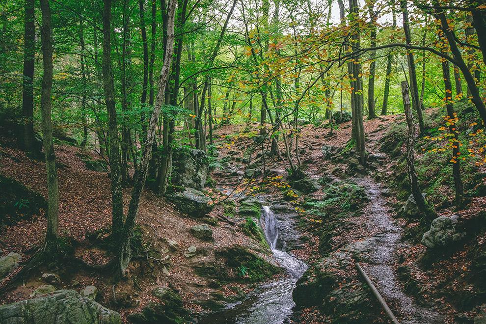 Riviertje baant zicht een weg door kleurrijk en sprookjesachtig bos