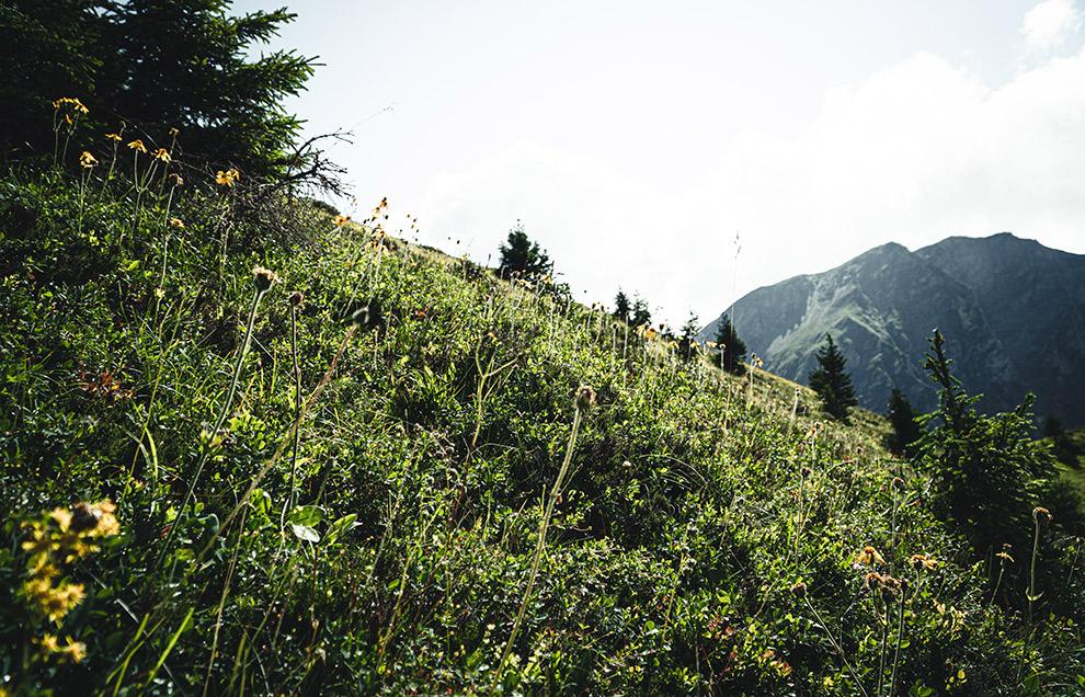 Heide in de magic woods in Zwitserland