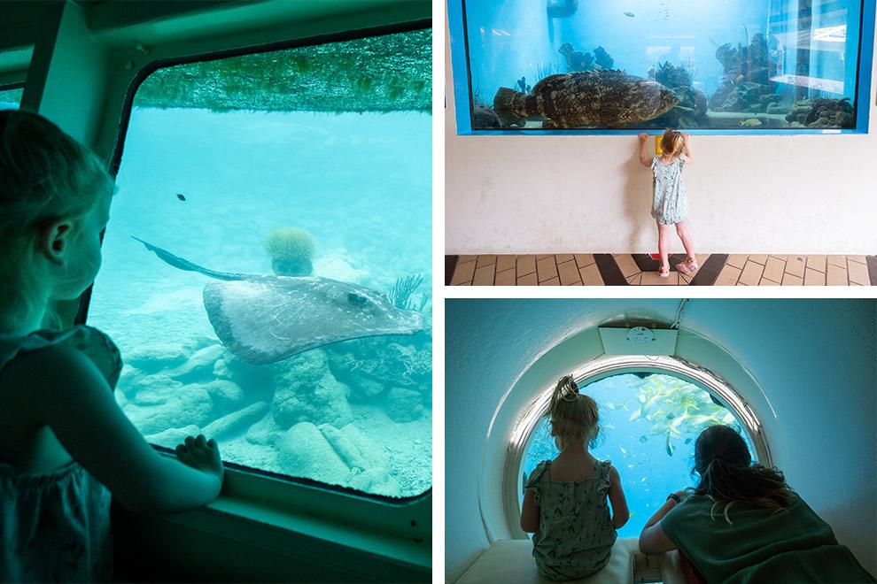 Op ontdekkingstocht onder water in het Sea Aquarium in Curaçao