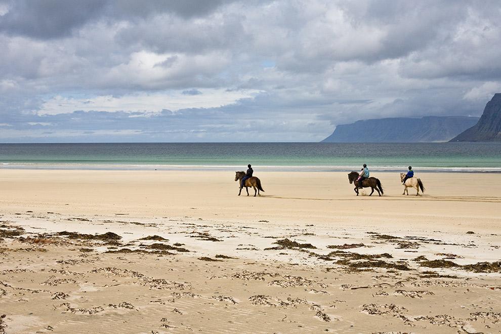 IJslandse paarden wandelen over het strand