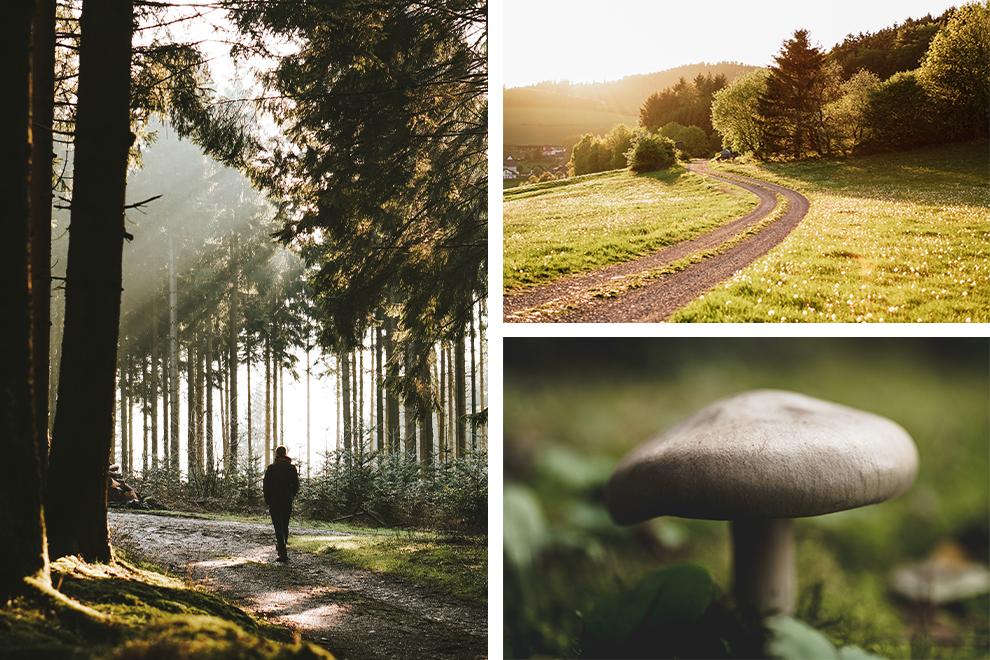 Een collage: wandelen door de groene natuur van Sauerland