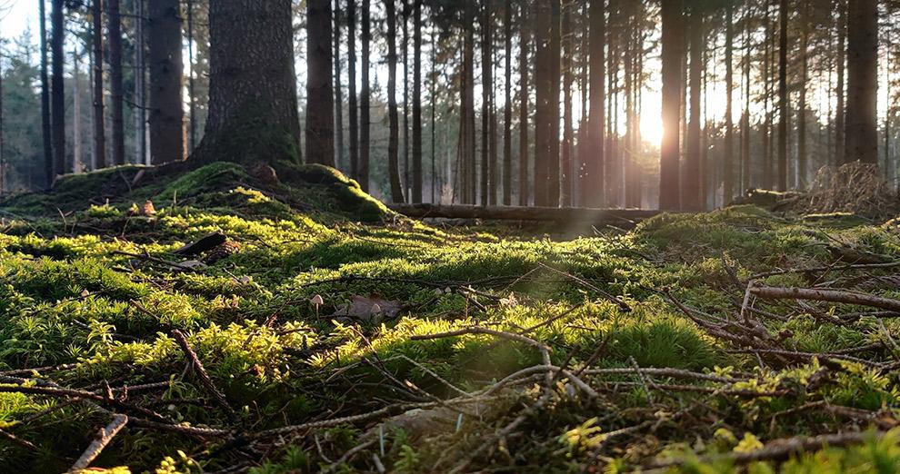 Zweeds-achtig bosgebied in Drenthe