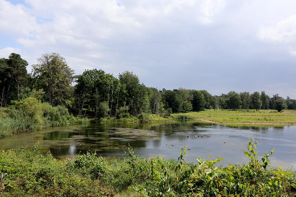 Meer omringd door Groen in de Seterse bossen van Brabant