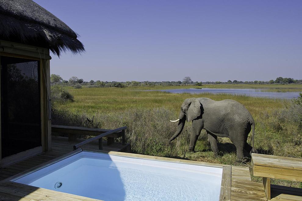 Olifant komt een kijkje nemen bij het kamp kamp de Vumbura Plains in Afrika