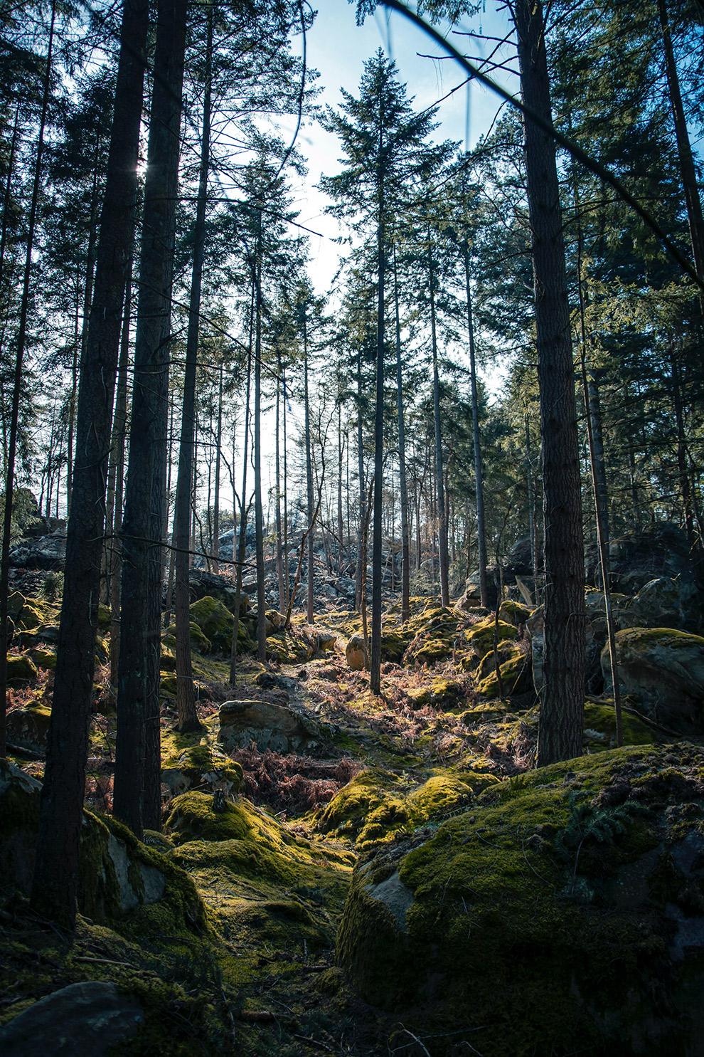 Uitgestrekt loofbomenbos in Forêt de Fontainebleau in Frankrijk