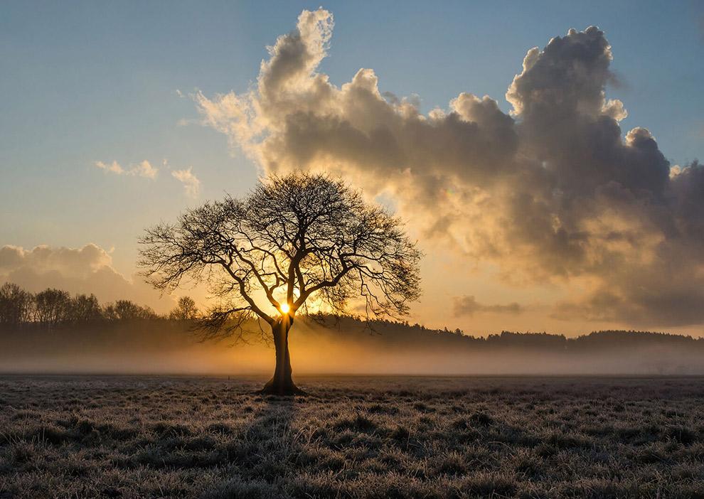 Zonnestralen schijnen door takken van boom in de Brabantse duinen