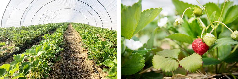Biologisch fruit van Terravie in Brabant