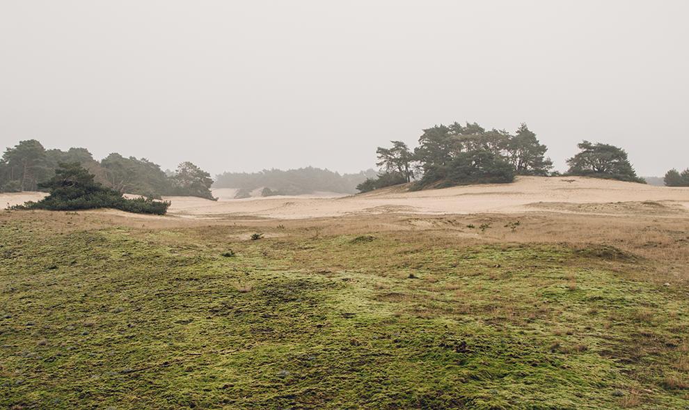 Met mos bedekte zandvlaktes in het winterlandschap van De Hoge Veluwe