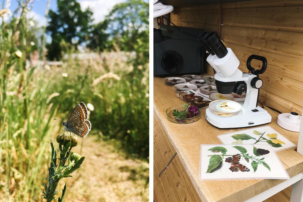 Bestudeer vlinders bij glamping Mot in Mokum