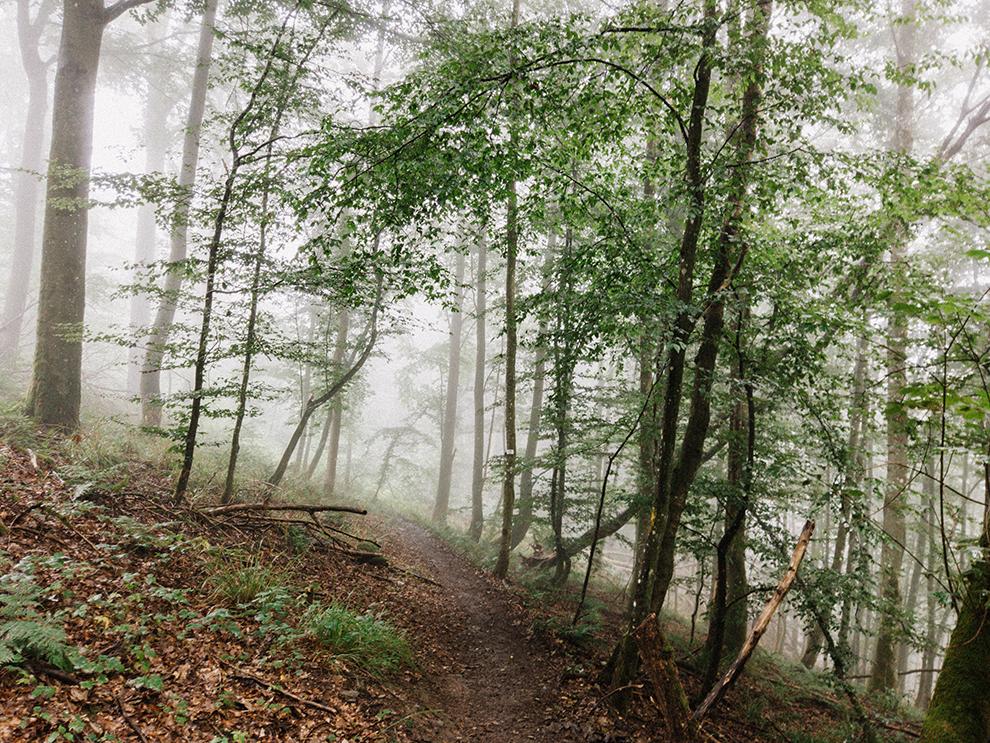 Laaghangende mist bij wandeling door bossen in de Belgische Ardennen