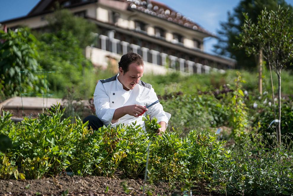 Kruidentuin waar koks hun ingrediënten halen in Culinarium Alpinum