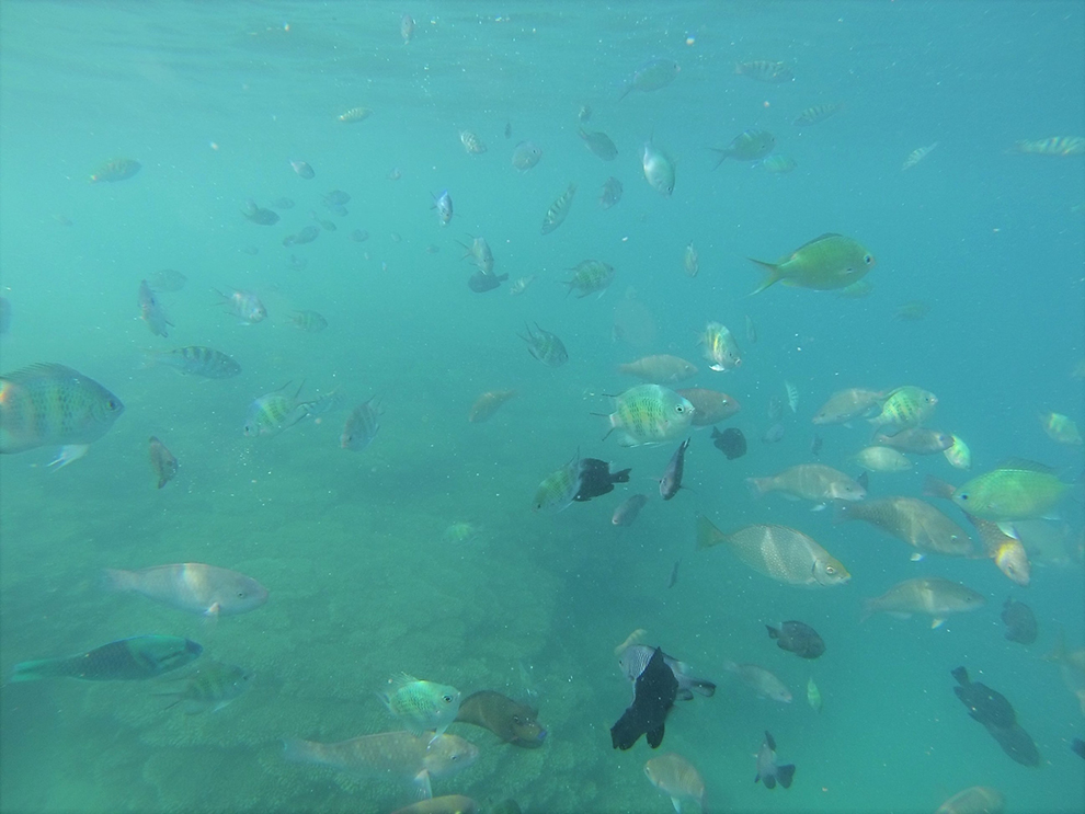 Hundreds of fishes underwater