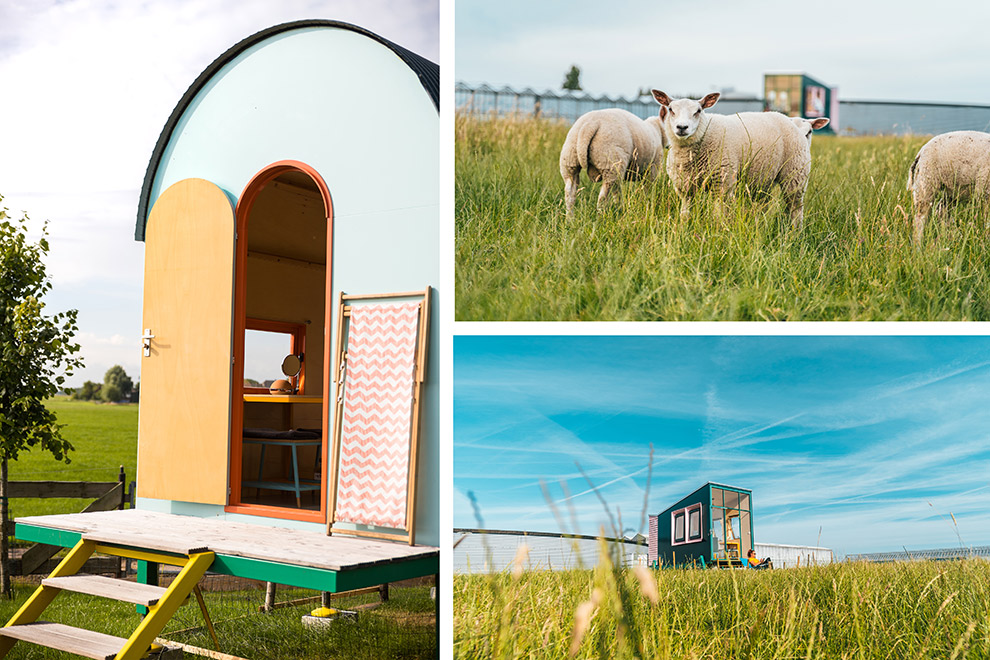 Verschillende hutten van HiHaHut en uitzicht over de wei met schapen