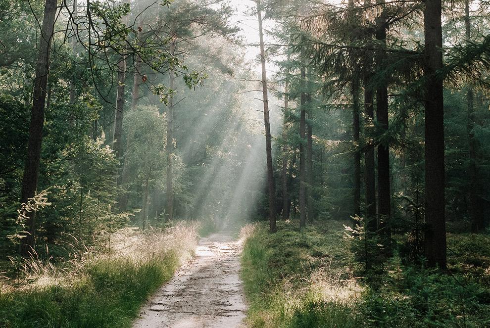 Zonnestralen belichten het bospad