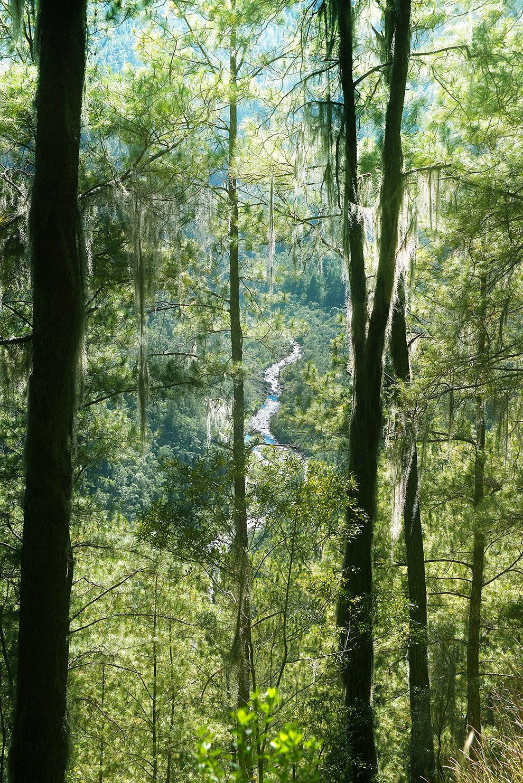 De groene jungle van de Dominicaanse Republiek