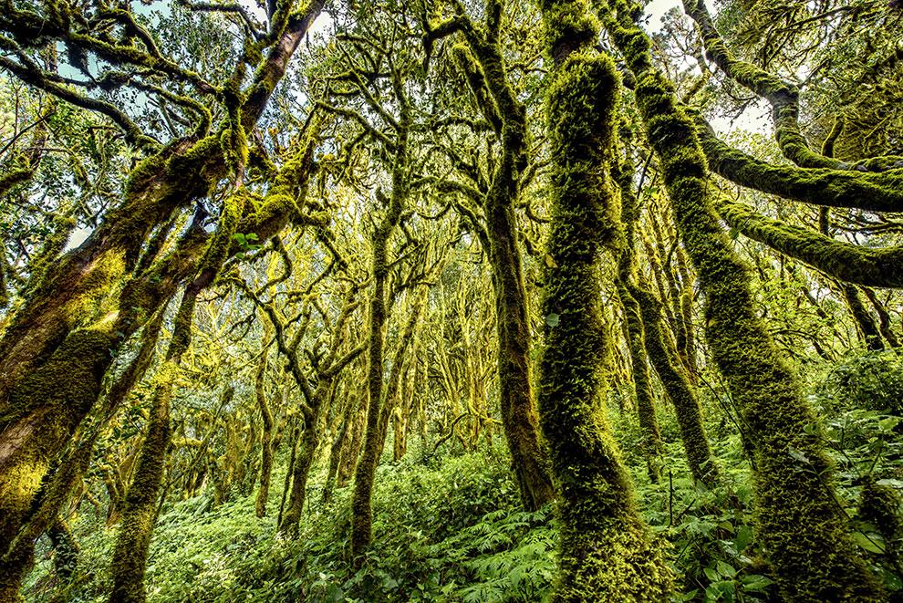 Met mos bedekte bomen in de Spaanse natuur