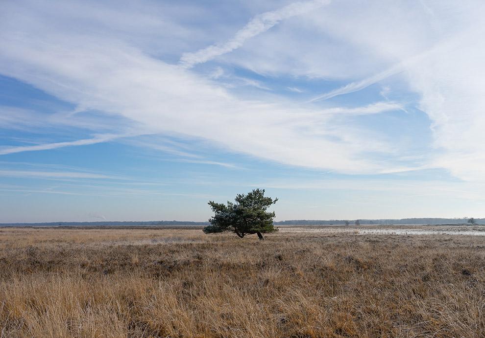 Eenzame boom te midden van uitgestrekte vlakte