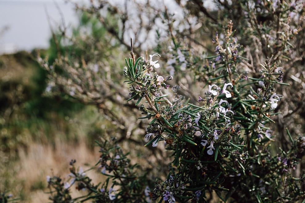 Bladerloze boompjes in de natuur van Frankrijk