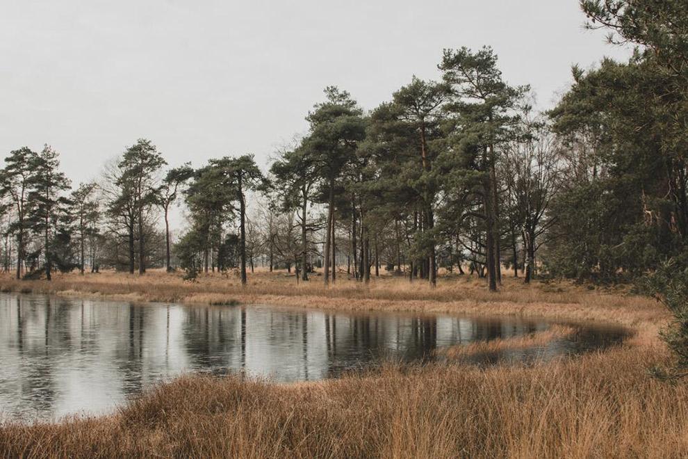 Vennetje met water omringd door kale bomen