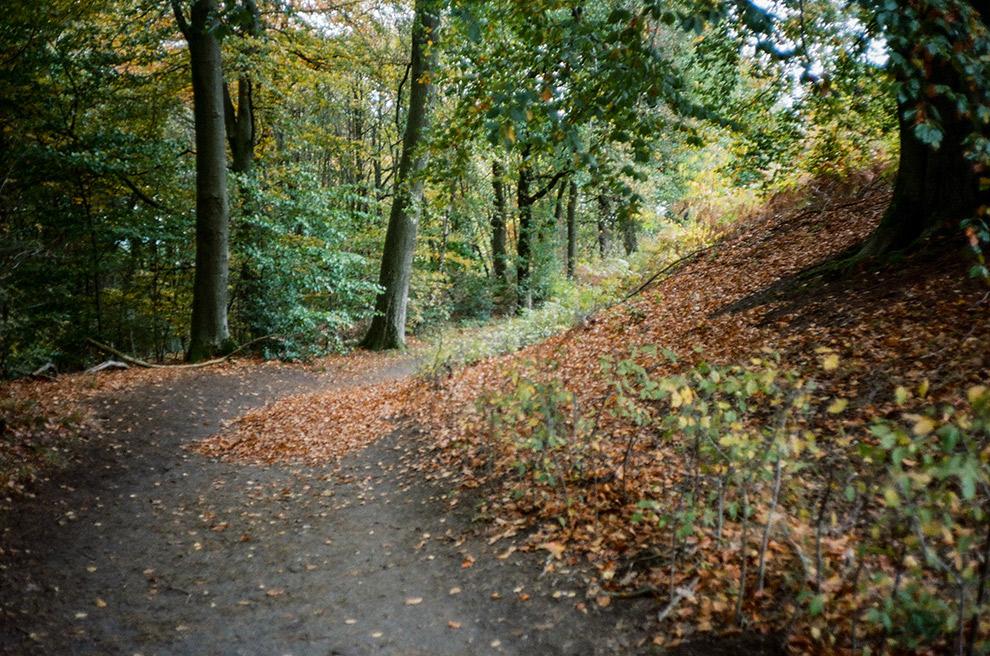 Een herfstachtige dag in het bos bij Nijmegen