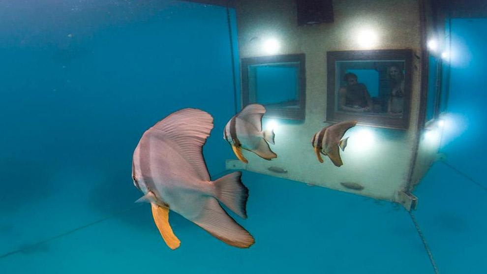 360 graden uitzicht onderwater met vis Nick die voorbij komt gezwommen