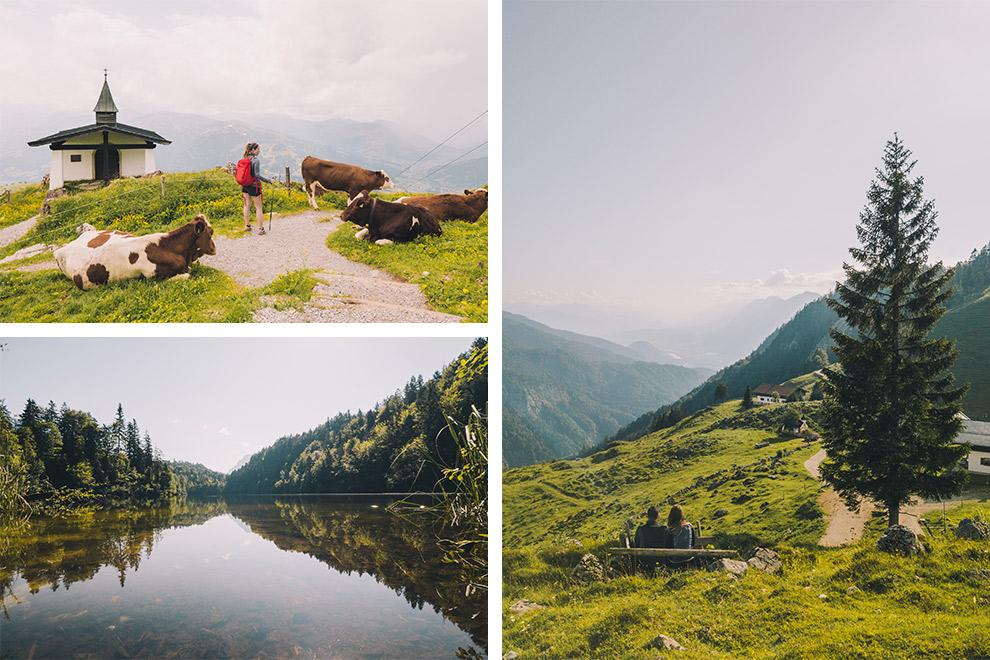 Wandelen langs bergmeren, koeien en groene valleien in Oostenrijk