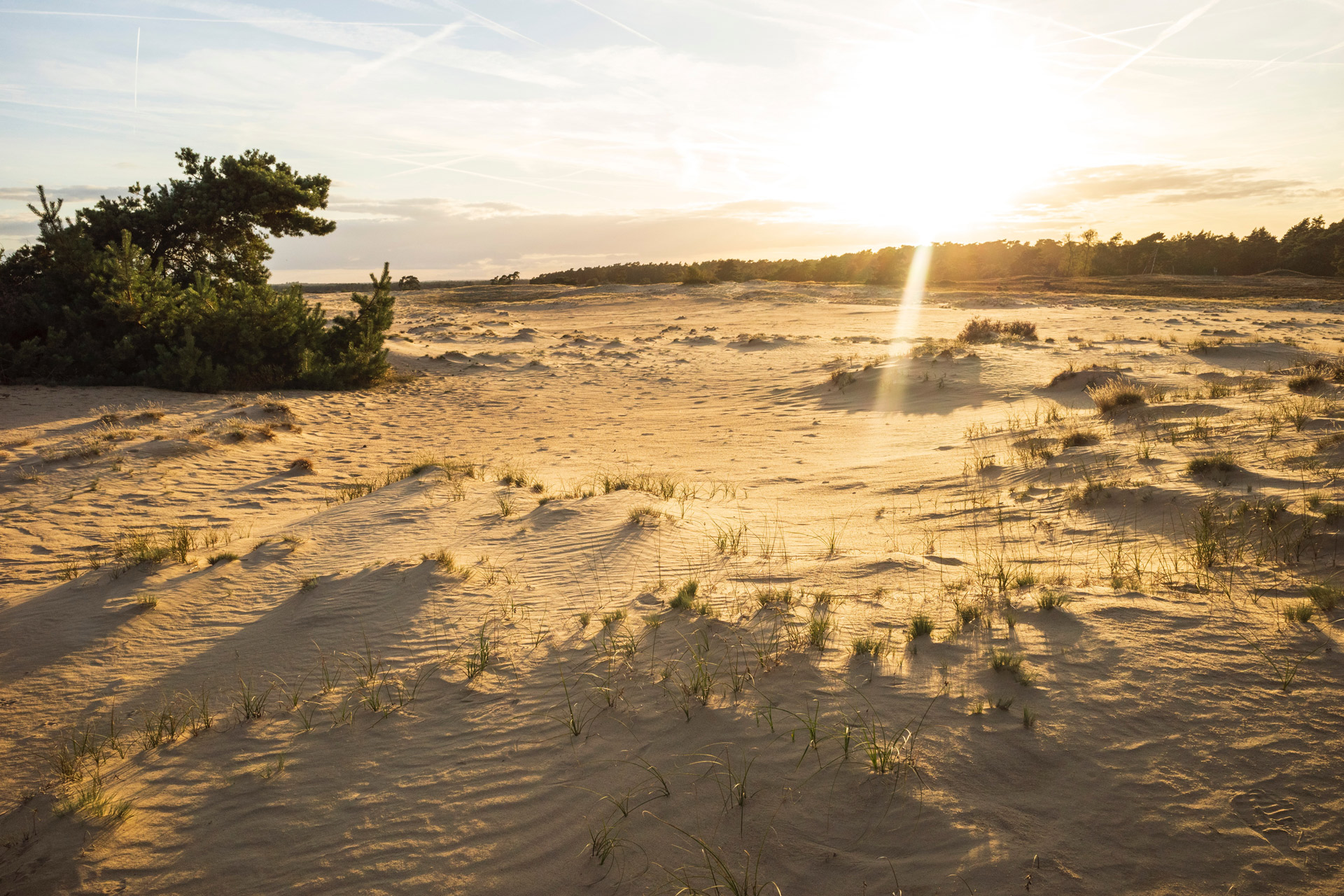 Zandvlakte De Veluwe bij opkomende zon