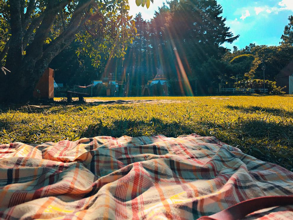 Picnicken in het gras